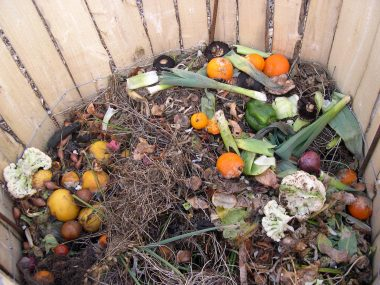 Gardening Time: How you can recycle better in the New Year